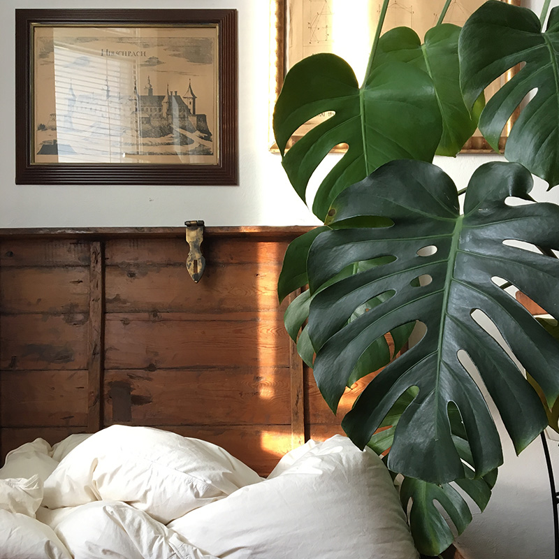 philodendron monstera decoration