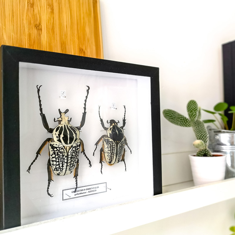 collection insectes decoration